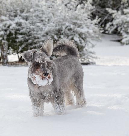 Casper in Snow