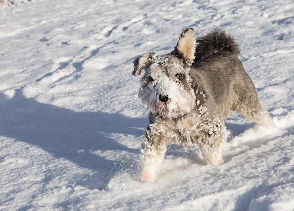 Casper Snowface