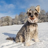 Casper in Snow 2