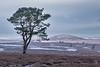 Near Polwarth in the Scottisgh Borders