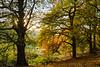 Holmehill in Autumn