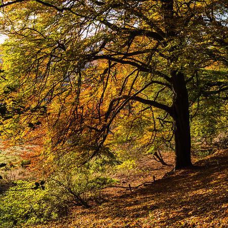 Autumn in Holmehill