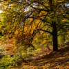 Autumn in Holmehill