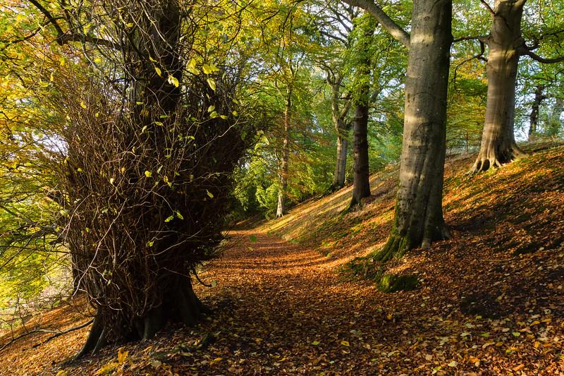 Holmehill Autumn 4
