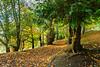 Holmehill Autumn 6