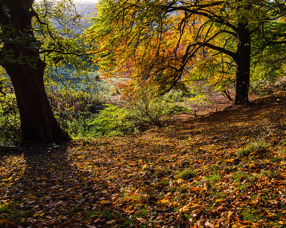 Holmehill Autumn 3