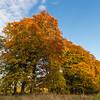 Holmehill Autumn Rising