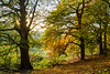 Holmehill Autumn 5