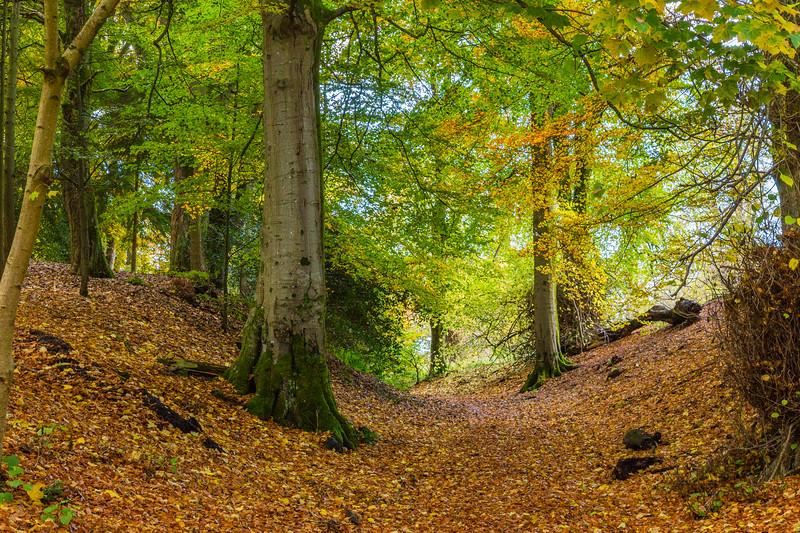 Holmehill Autumn 8