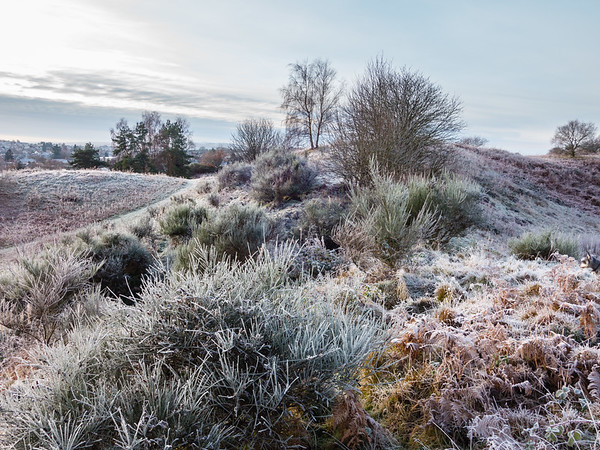 Frosted Laighills 2