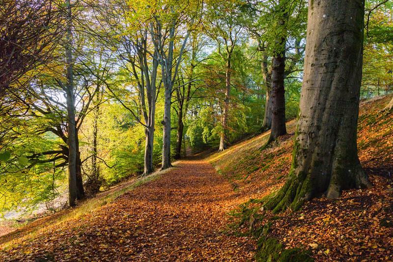 Holmehill Autumn 10
