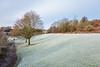 Park Frost