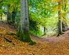 Holmehill Autumn 7