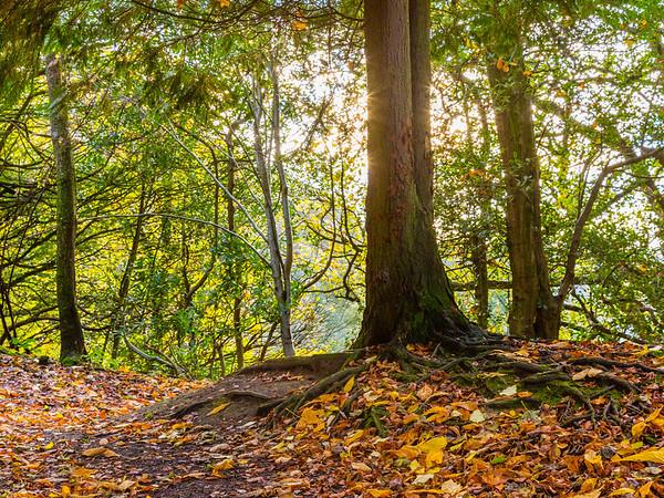 Holmehill Autumn Glow