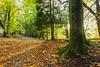 Holmehill Autumn 9