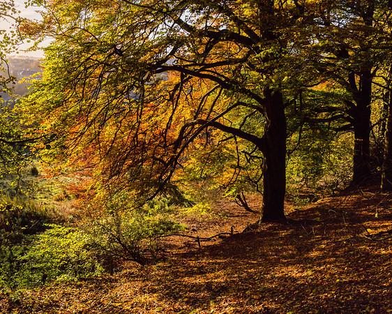 Holmehill Autumn 1