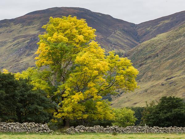 Ash Tree by Ben Dearg
