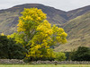Ash Tree by Ben Dearg