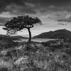 Maree Tree
