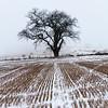 Winter Harvest II