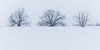 Three Winter Trees