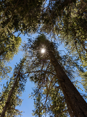 Yosemite Sunburst