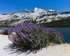 Tenaya Lake Lavender