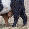Ma Maw's Milk