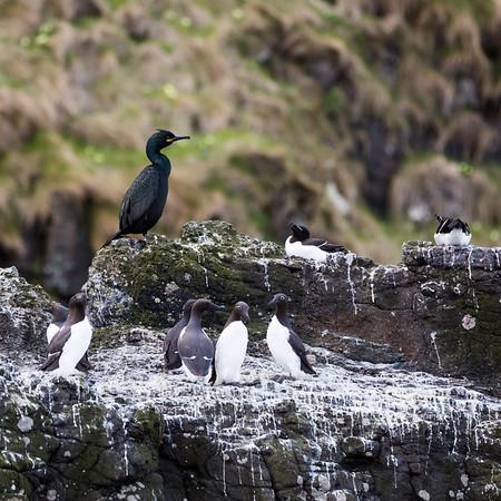 Canna Seabirds