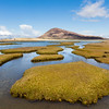 Northton Machair Saltmarsh