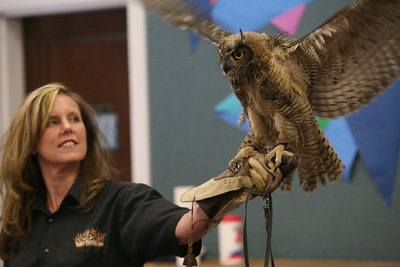 Barbi Kerschner shows the children Archimedes the Great Horned owel«s silent flapping wings at the SSF Down Town Library. Wild Things Inc. visited the library with six different wild animals for children and grown ups to see. The organization, which has over 60 species of wildlife, takes in animals that have been rescued from stress situations and for one reason or another cannot return to the wild.  The organization uses these animals to instruct young and old alike about living harmoniously with natureÕs habitat.
