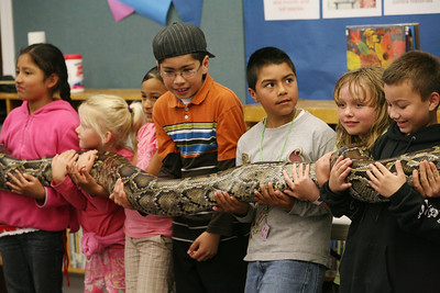 "Children hold, ""Miss Piggy"" the Python at the SSF Down Town Library. Gabe and Barbi Kerschner of Wild Things Inc. visited the library with six different wild animals for children and grown ups to see. The organization, which has over 60 species of wildlife, takes in animals that have been rescued from stress situations and for one reason or another cannot return to the wild.  The organization uses these animals to instruct young and old alike about living harmoniously with natureÕs habitat."