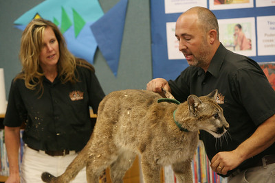 Gabe and Barbi Kerschner show the children Cheyenne, the Mountain Lion at the SSF Down Town Library. Wild Things Inc. visited the library with six different wild animals for children and grown ups to see. The organization, which has over 60 species of wildlife, takes in animals that have been rescued from stress situations and for one reason or another cannot return to the wild.  The organization uses these animals to instruct young and old alike about living harmoniously with natureÕs habitat.