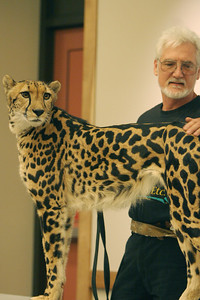 Rob Dicely handles Shishoni an 8 year old Cheetah named Kgosi as his wife Barbara tells the children about the animal and its species.  A variety of Wild Cats wee displayed to include Shishoni, a 3 year old female mountain lion.  Children and parents alike crowded the Millbrae Library for a glimpse of the live Wild Cat presentation by Leopards, Etc.  They provide educational programs for schools, private groups and corporations.