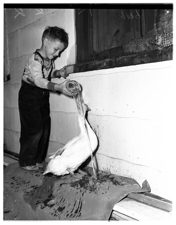 Duck has to leave mistress (Pasadena), 1951