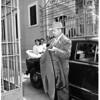 Safeway robbery, 1951