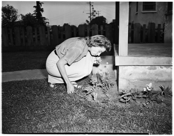 Hull girl, 1951