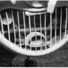 Birds nest inside of air intake of Navion airplane, 1951