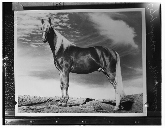 Woman sues for $200,000 for death of horse, 1951