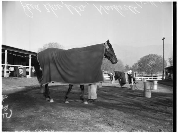 Horses -- Race -- Santa Anita opening day favorite, 1957