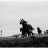 Horses -- race -- Caliente races, 1958