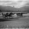 Horses -- race -- Harness race feature, 1958