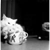 Cats, 1958