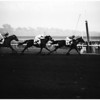 Horses -- race -- Santa Anita feature, 1957