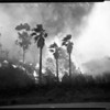 Griffith Park brush fire, 1957