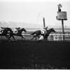 Horses -- race -- Santa Anita, 1957