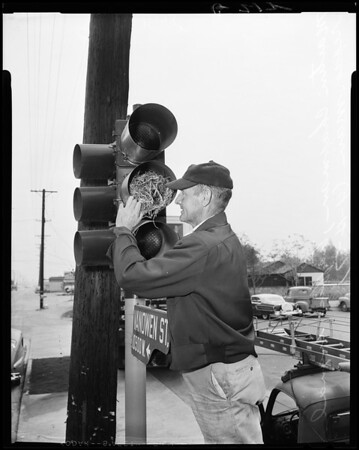 Birds nest in traffic signal (southwest corner on Vineland and Vanowen, North Hollywood), 1957