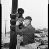 Birds nest in traffic signal (southwest corner on Vineland and Vanowen, North Hollywood), 1957