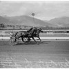 Horses -- race -- harness at Santa Anita -- 2 horse pacer race, 1958