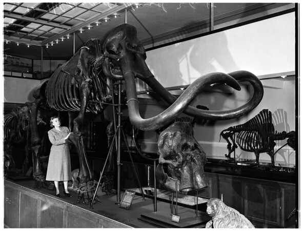 Natural History Museum of Los Angeles County, 1957